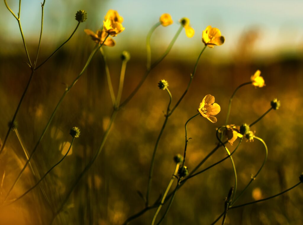 habits become personality. Yellow flowers in nature.